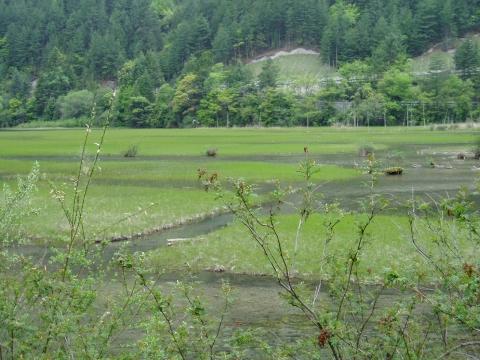 schwimmende Grasinseln im Jiuzhaigou NP - (China, Chengdu, Sichuan)