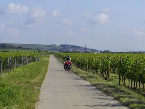 Weinterassen Oppenheim - (Deutschland, Reiseziel, Wandern)