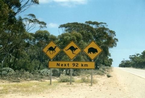 Koalas, Australien - (Sehenswürdigkeiten, Australien)
