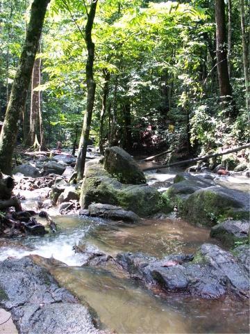 Regenwald Malaysia - (Asien, Malaysia, Nationalpark Taman Negara)