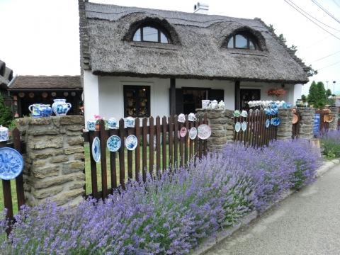 Lavendelblüte auf Tihany - (Europa, Reiseziel, besonders)