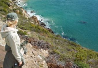 Walbeobachtung vom Land aus in Plettenberg Bay - (Afrika, Suedafrika, Wale)