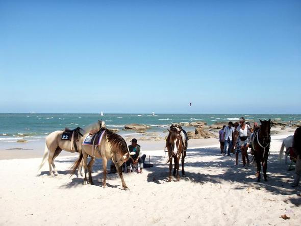 Pferde am Strand - (Asien, Thailand, Baden)
