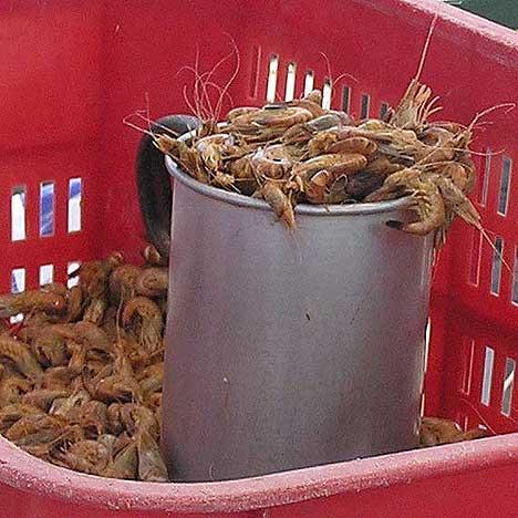 Büsumer Krabben frisch vom Kutter - (Deutschland, Nordsee, Krabben)