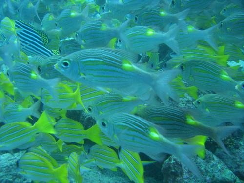 Unterwasserwelt_Malediven - (Tauchen, Malediven, Schnorcheln)
