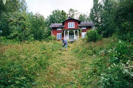 elche im park haus am see ysäter svaskoog - (Schweden, Nationalpark, beobachten)