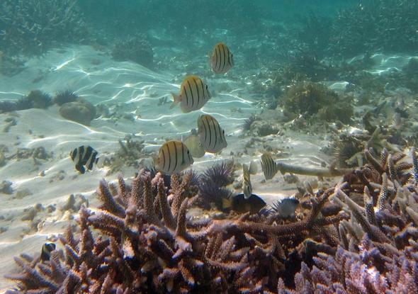 Cocos Beach - (Schnorcheln, Dominikanische Republik, Dom Rep)