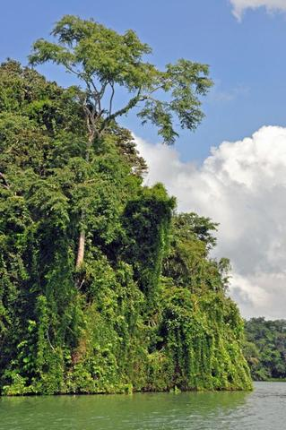 Flora und Fauna von Panama - (Mittelamerika, Impfung, Panama)