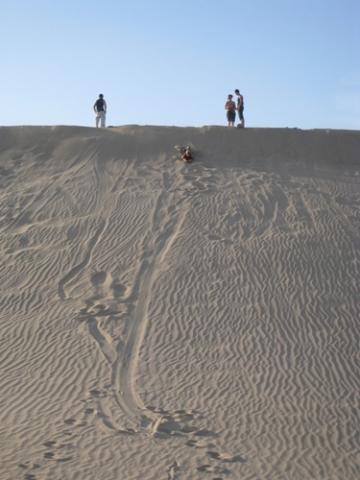 Sich aufs Brett zu legen macht noch viel mehr Spaß, als auf dem Brett zu stehen und wirklich zu boarden. - (Sand, Sandboarden, Boarden)