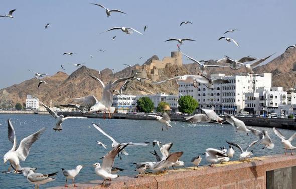 """Szene von """"Die Vögel"""" (Teil 2), Drehort: Muttrah Fort, Oman - (Oman, Persischer Golf, Arabische Halbinsel)"""