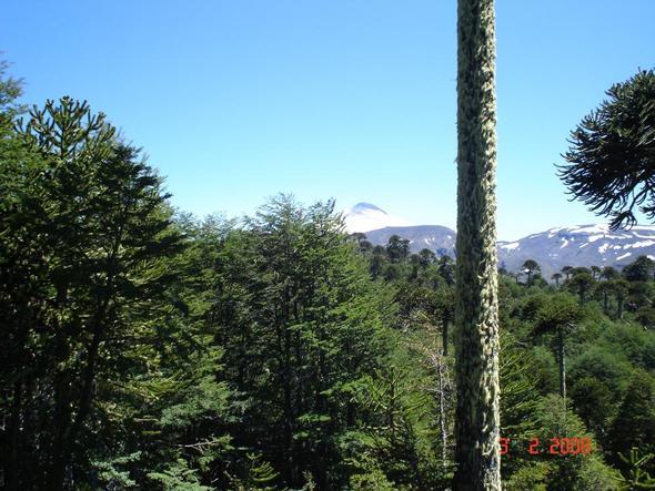 Nationalpark Villarrica mit gleichnamigen Vulkan - (Rundreise, Ort, Chile)