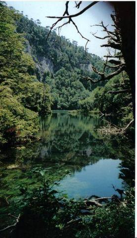 Nationalpark Huerquehue - (Lateinamerika, Mittelamerika, Nationalpark)