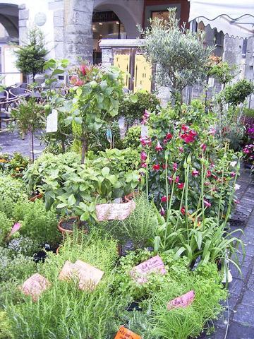 Blumenstand in der Altstadt - (Deutschland, Insel, Bodensee)