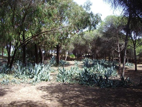 Wald bei La Marina - (Spanien, Reiseziel, Golf)
