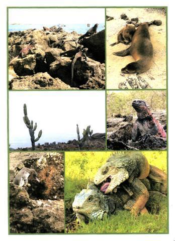 Galapagos - (Südamerika, Amerika, Lateinamerika)