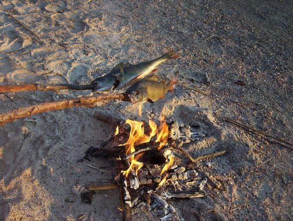 frühstücksbarsche haus am see schweden - (Schweden, angeln)