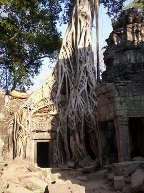 Ta Prohm - (Kambodscha, Tempel, Angkor Wat)
