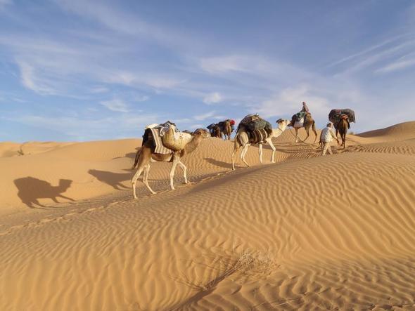 Sahara Trekking Nov. 2011 - (Wüste, Temperatur, Hitze)