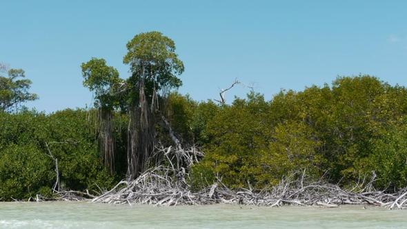 Fahrt auf dem Rio Lagartos - (Lateinamerika, Mexiko, Yucatan)