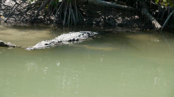 Echsen im Rio Lagartos - (Lateinamerika, Mexiko, Yucatan)