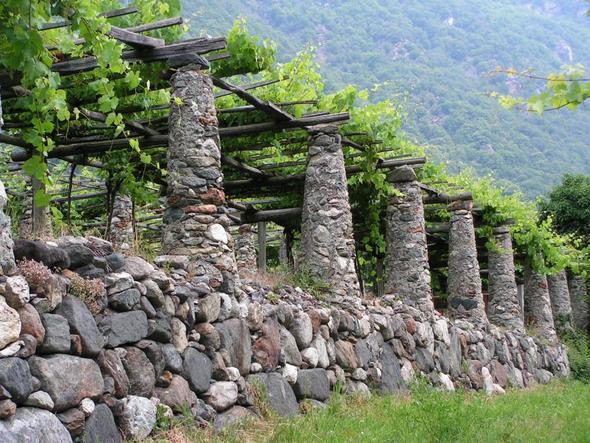 Weinanbau - (Italien, Nationalpark, Gran Paradiso)