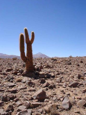 Atacama Wüste - (Südamerika, Argentinien, Chile)