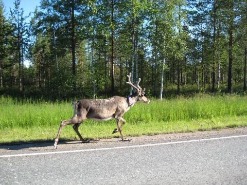 - (Skandinavien, Norwegen, Schweden)