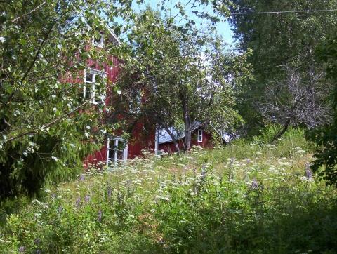 zecken freie gebiete  - (Europa, Skandinavien, Gesundheit)