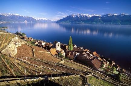 Lavaux - (Schweiz, Wein, Qualität)