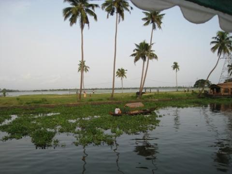 Bilduntertitel eingeben... - (Indien, Kerala, Hausboote)