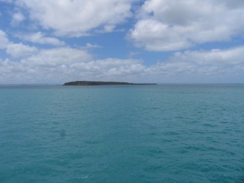 - (Australien, Ozeanien, Tierbeobachtung)