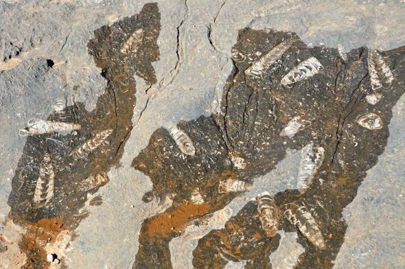 Fossilenfunde im Oman - (Dubai, Tagesausflug, Emirates)