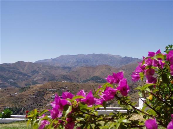 Andalusien im Juni - (Spanien, Rundreise, Andalusien)