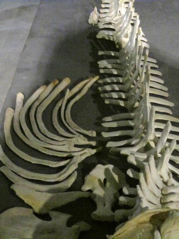 Walmuseum - (USA, Museum, Wale)