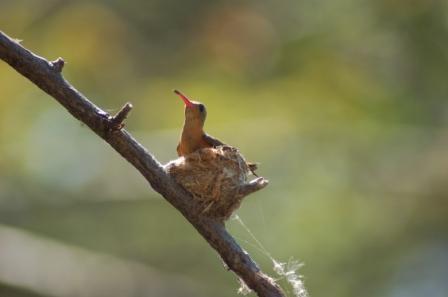 Kleine Vögel... - (Südamerika, Costa-Rica, Parque-nacional)