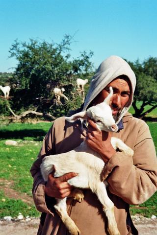 Arganziegen - (Afrika, Marokko, Nordafrika)