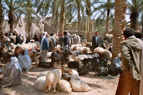 Oase Douz - Südtunesien - (Tunesien, Nordafrika, Djerba)