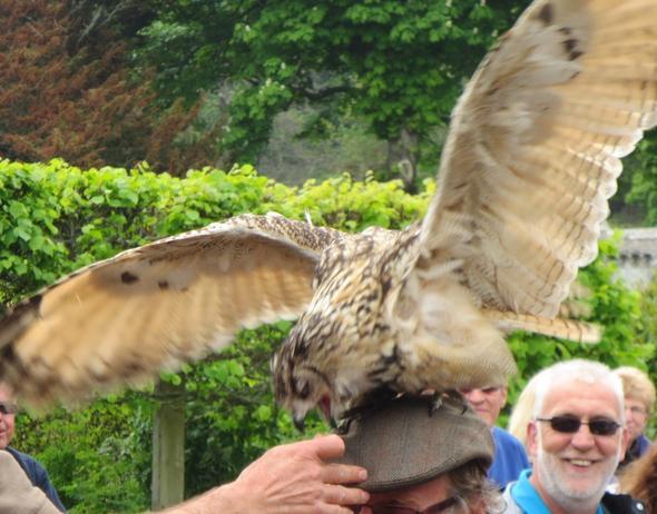 Falcon Show - (Natur, Nationalpark, Schottland)