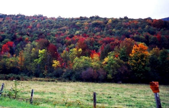 Maine Foliage! - (USA, Amerika, Ostküste)