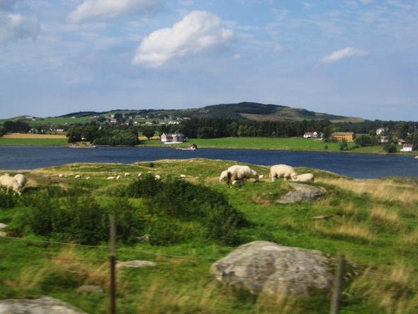 Stavanger - (Europa, Sehenswürdigkeiten, Städtereise)