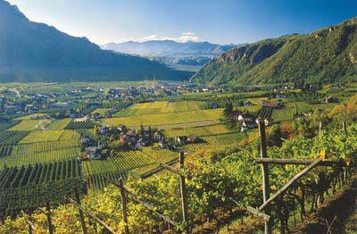 Wein Südtirol - (Europa, Reiseziel, Einreise)