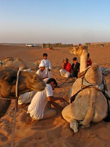 """Arbeit am """"Wüstenschiff"""" - (Reiseveranstalter, Oman, Reiseleiter)"""