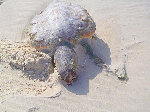 tote Schildkroete auf der Insel - (Insel, Empfehlung, Portugal)