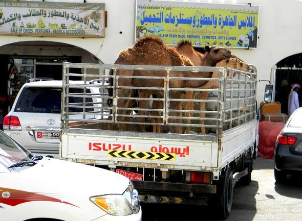 Heimfahrt vom Markt - (Oman, teuer)