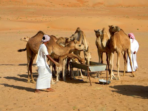 Beduinen in der Rub al Khali - (Oman, teuer)