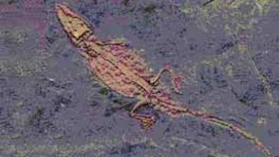 Krokodilfossil Südengland - (Europa, Wildtiere, Krokodil)