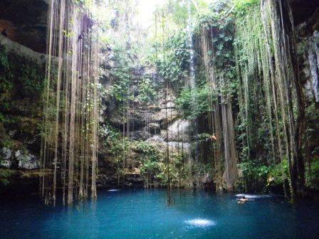 Baden im Cenote mit Fischen und Luftwurzeln - (Ausflug, Mexiko, Urlaubstipps)