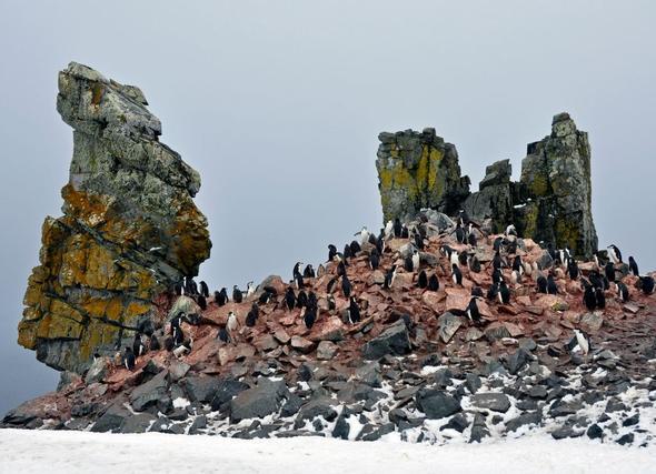 Antarktis - (Kreuzfahrt, Route)