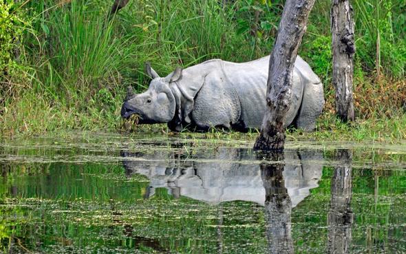 Im Chitwan Nationalpark, zu Fuß unterwegs - (Tiere, Safari, Kontinent)