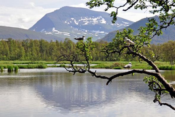 Der Prestvannet See bei Tromsø - (Städtereise, Norwegen)